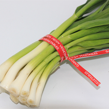 paper/plastic and wired twist tie for flower/vegetable
