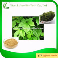 Chinese traditional herbal pure and natural Gynostemma pentaphyllum extract with Gypenoside 10-98% for pharmaceutical herlth