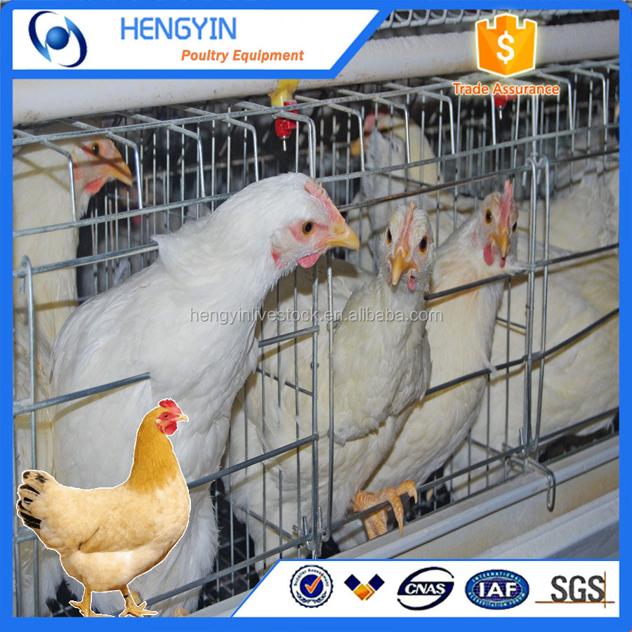 Best sale chicken egg layer cages in South africa farm,chicken battery cage for layers