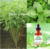 stevia liquid 60ml (vanilla flavor) bottle