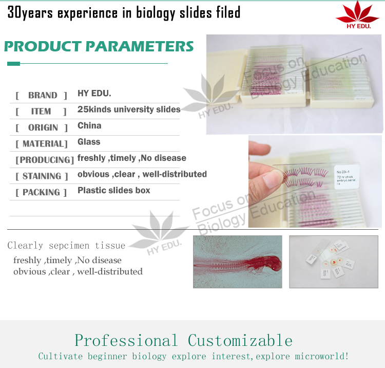 Fixed set hot-products 25kinds chick embryo microscope slides for biology embryology survey