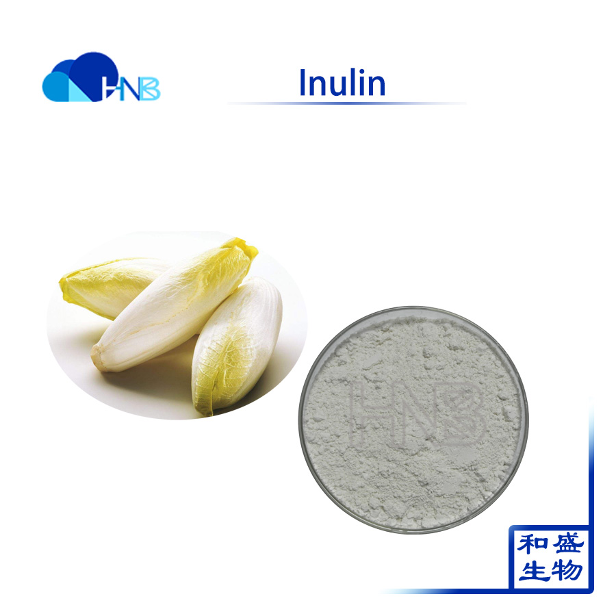natural Organic Cichorium Intybus Extract inulin 90% synanthrin for hot sale