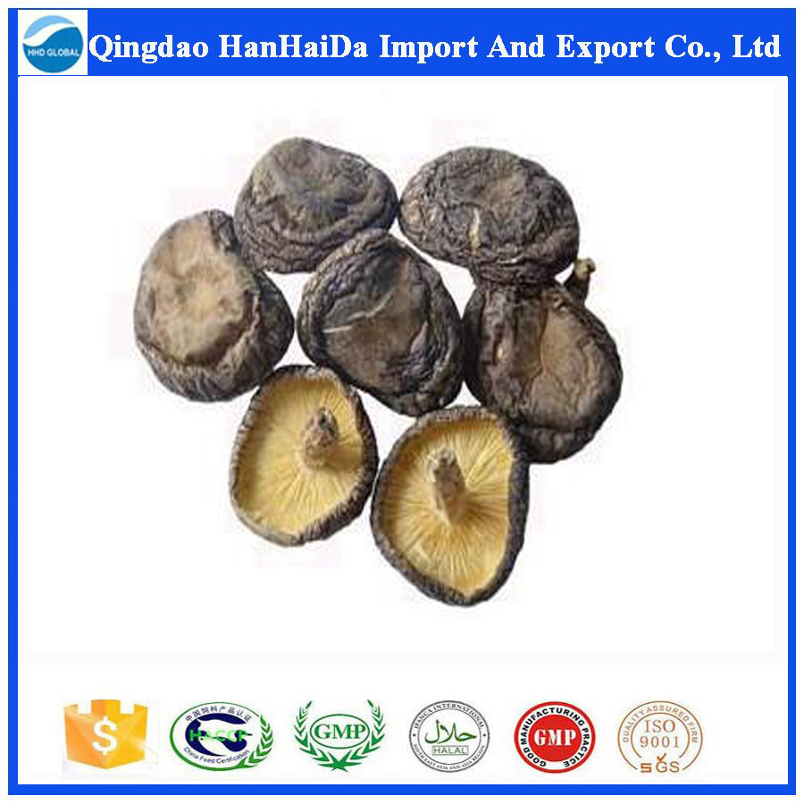 Hot selling high quality Mushroom Dried with reasonable price and fast delivery !!!