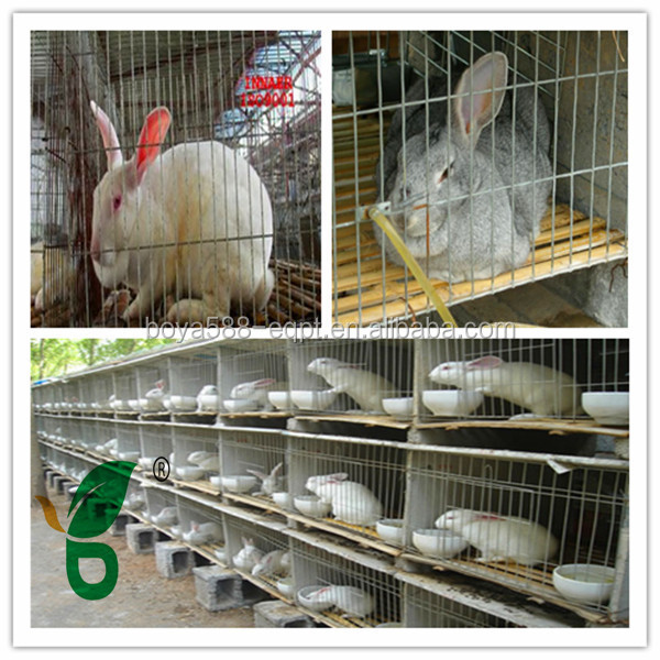 galvanized or pvc coated high quality large rabbit hutch for sale
