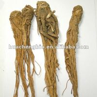 ISO&GMP 1% Ligustilides Chinese Angelica Root P.E.