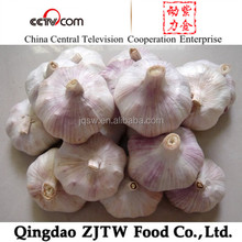 China natural garlic on promotion