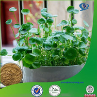 GMP manufacturer top quality asiatic acid powder from gotu kola seed