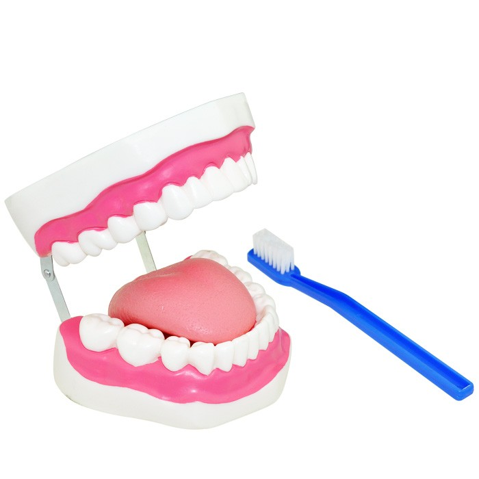 Best selling tooth hygiene set with tongue for teaching model