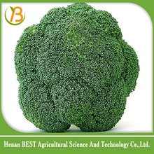 frozen broccoli/iqf broccoli/white broccoli