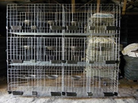 wire mesh breeding cage of pigeon