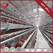 China Manufacturer Poultry Farm Automatic Chicken Layer Cage
