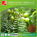 Phyllanthus emblica fruit extract