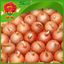 yellow onions fresh onions