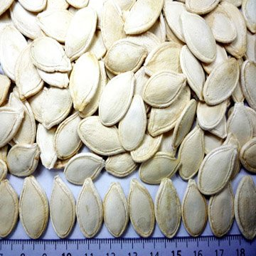 top quality chinese snow white pumpkin seeds top sale new crop