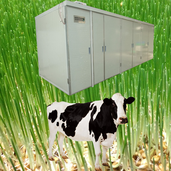 hydroponics systems manufacturer cattle feed plant project