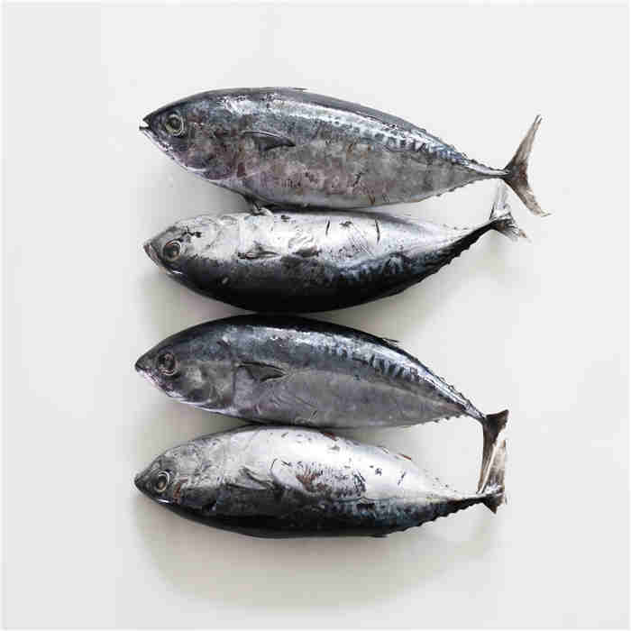 High-class Good price Frozen yellowfin Bonito tuna canned in oil and in water