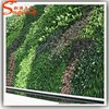 Living and verticial green plants of artificial green wall for decor home