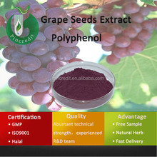 Grape Seeds Extract/Black Grape Seeds Extract/Grape Seeds Extract Polyphenol