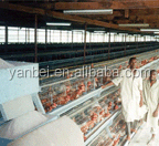 9WCD-3120 A Type Layer Chicken Cage Poultry Breeding Equipment