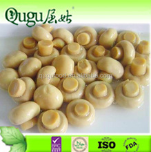 Cheap price canned mushroom champignon, canned mushroom oyster
