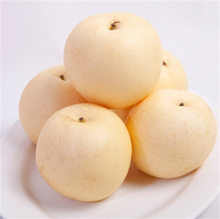 china supplier dependable big discount fresh ya pear