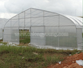 Single span agriculture plastic commercial greenhouse for farming