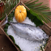 New Arrival Frozen Seafood Fish Whole Round Skipjack Tuna
