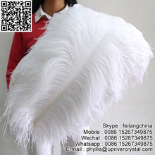 Leading Supplier Feilang Wholesale White Ostrich Feather