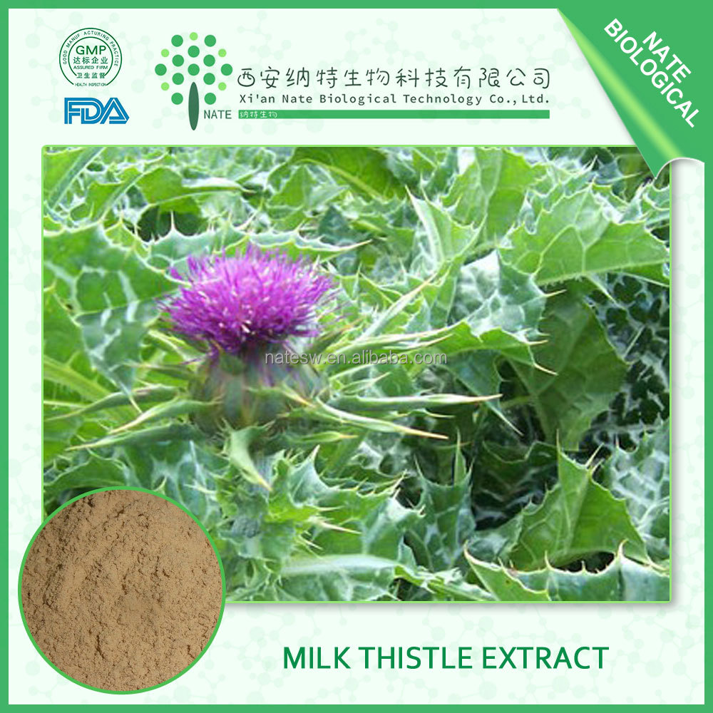 PURE NATURAL Milk Thistle P.e. Silybum Marianum 30% Silymarin for health care