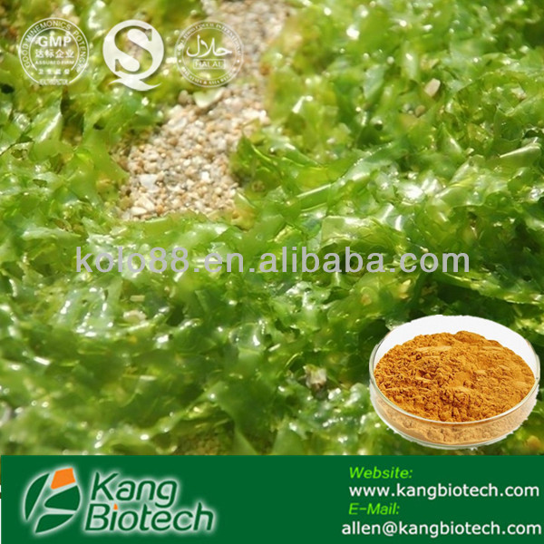 Kelp Extract: Boosts Immunity and Detoxifies