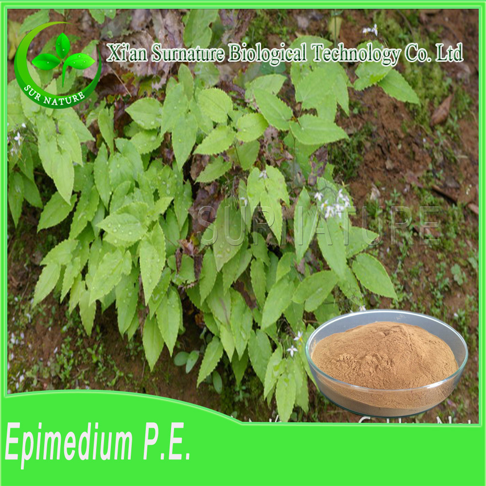 Natural high quality OEM epimedium sagittatum extract/icariin 50% 60% 80% 98% epimedium extract/epimedium extract powder