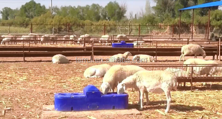 Automatic Animal Drinking Water For Livestock Sheep Goat