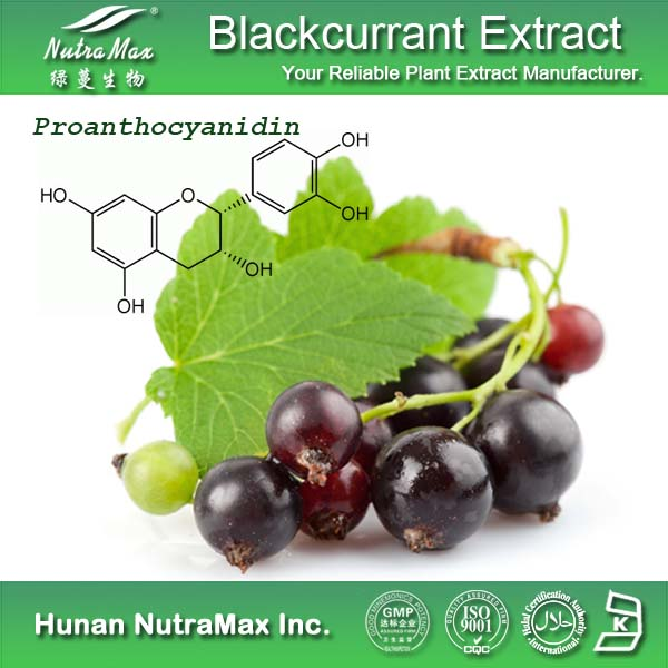 GMP&ISO Black Currant Juice Powder/Black Currant Seed Extract/Black Currant Anthocyanin