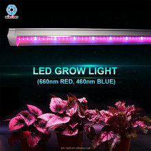 China manufacturer red and blue greenhouse lettuce and leafy vegetable special T8 led grow light