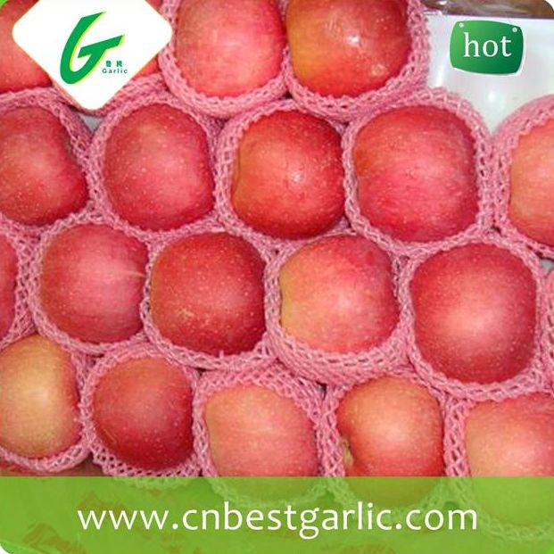 New fresh fruits bulk red fuji apple price