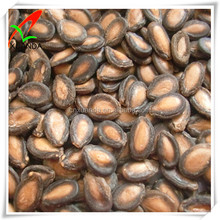 chinese black watermelon seeds