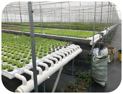 Greenhouse industrial pvc pipe hydroponic system nft channel