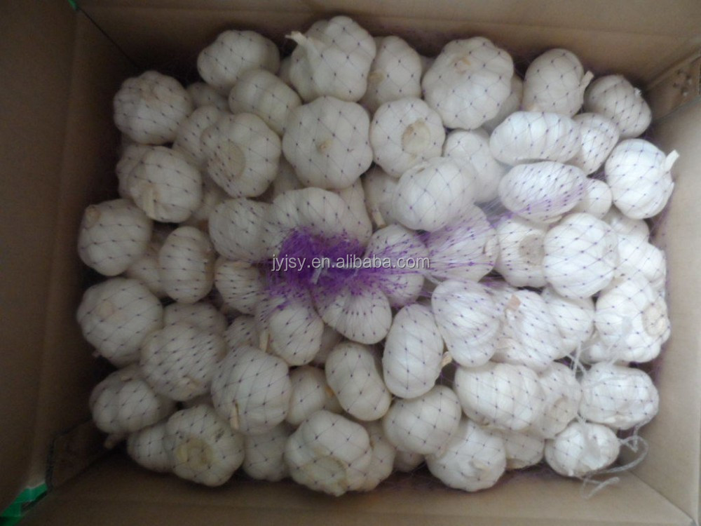 fresh white garlic for 5cm 5.5cm Wholesale products natural white garlic
