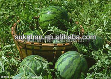 Microbial Fertilizer for Lawn Plantation/rubber tree/tea plant/watermelon