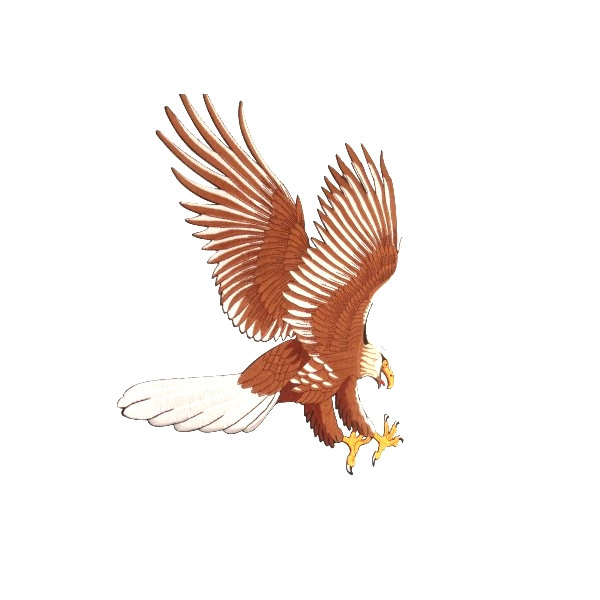 Majestic Eagle Custom Embroidery Patche Animals Customized Embroidery patches