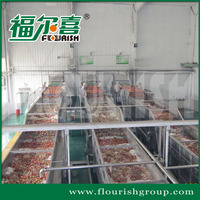 chinese full automatic industrial fruit and vegetable bubble washing machine