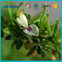 ISO22000 factory supply herbs extraction st johns wort capsules powder
