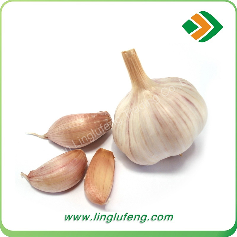 promotional fresh pure white 4.5cm 5.0cm 5.5cm 6.0cm garlic with best price