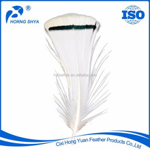 Alibaba Horng Shya Factory High Quality Lady Amherst Pheasant Feathers For Sale
