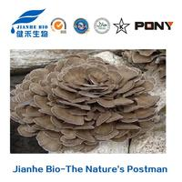 Grifola Frondosa Maitake Powder for Innate Immune System