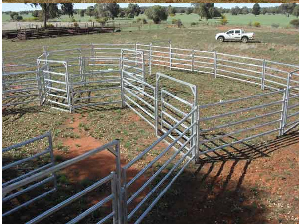Galvanized cheap cattle panel for sale