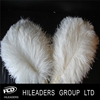 2016 Hot Sale Ostrich Feather