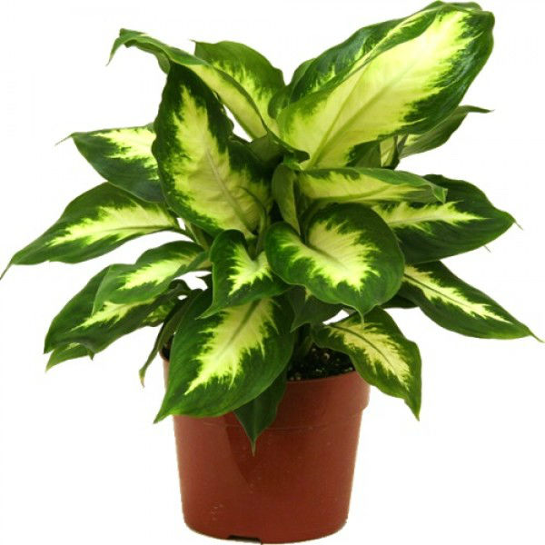 Natural Indoor Plants