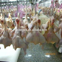 Frozen Halal Whole Chicken without head,neck,liver,feet