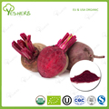 ISO supplier raw beet root powder